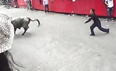 Bull vs Man Doesn't Go Well for the Man