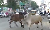 Bull kills a guy on a motorcycle in india