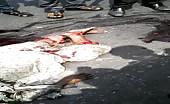 Horrible Road Accident In Dhaka, Bangladesh