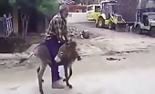 Indian Horny Donkey