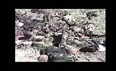 Corpse Of Syrian Army