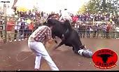 Killer Bull Takes Revenge